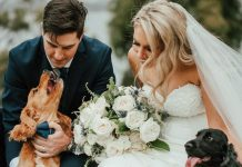 How To Include Pets In Your Wedding Day