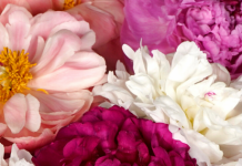 Top 10 Flowers for Mother's Day